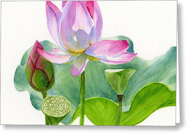 Lotus Lily Greeting Cards - Pink Lotus Blossom with Pad and Bud Greeting Card by Sharon Freeman