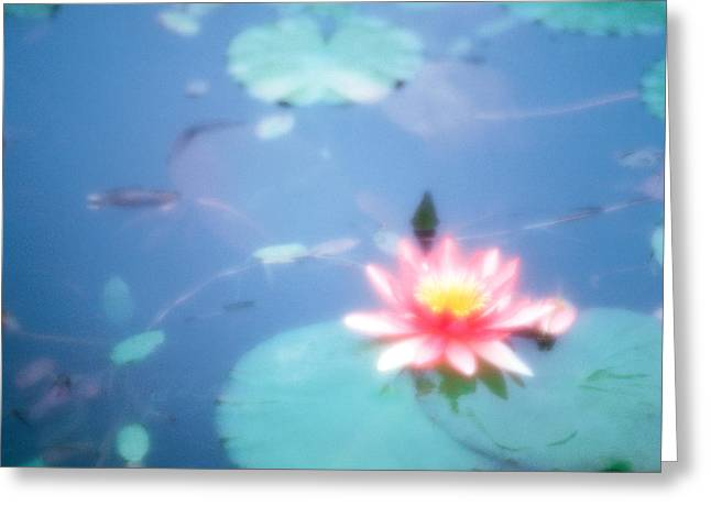 Aquatic Greeting Cards - Pink Lotus Flower In Pool Greeting Card by Panoramic Images