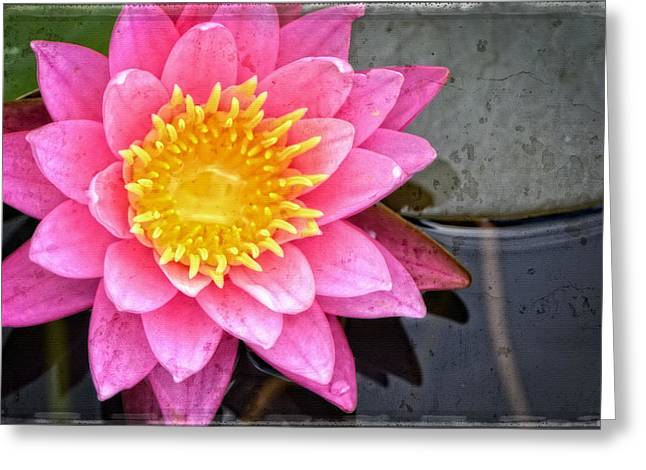 Pink Lotus Greeting Cards - Pink Lotus Flower - Zen Art by Sharon Cummings Greeting Card by Sharon Cummings