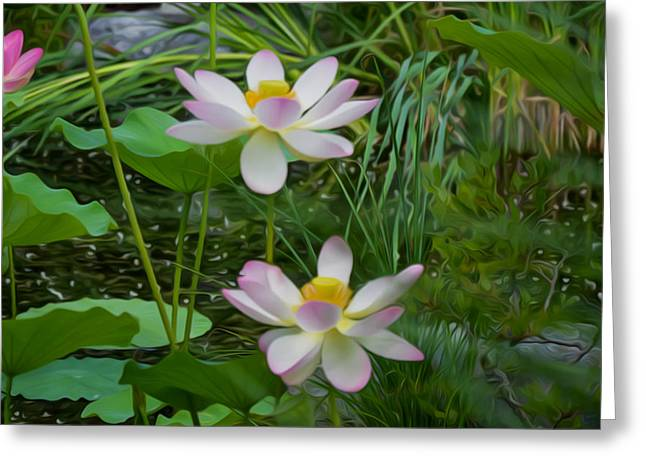 Outdoor Greeting Cards - Pink Lotus  Greeting Card by Lanjee Chee