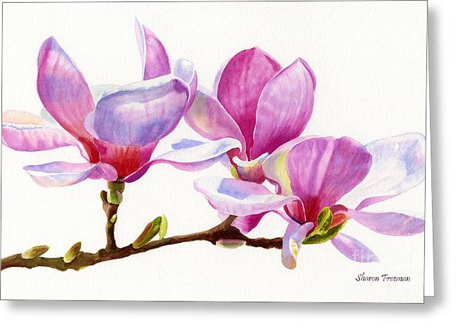 Close Up Paintings Greeting Cards - Pink Magnolia Blossoms on a Branch Greeting Card by Sharon Freeman