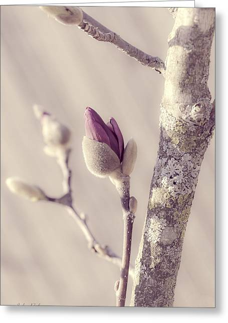 Chicago Botanic Garden Greeting Cards - Pink Magnolia Bud  Greeting Card by Julie Palencia