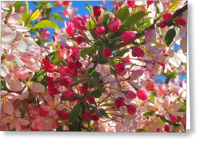 Easter Flowers Greeting Cards - Pink Magnolia Greeting Card by Joann Vitali