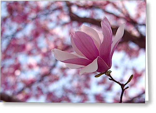 Purple Flowers Greeting Cards - Pink Magnolia Greeting Card by Rona Black