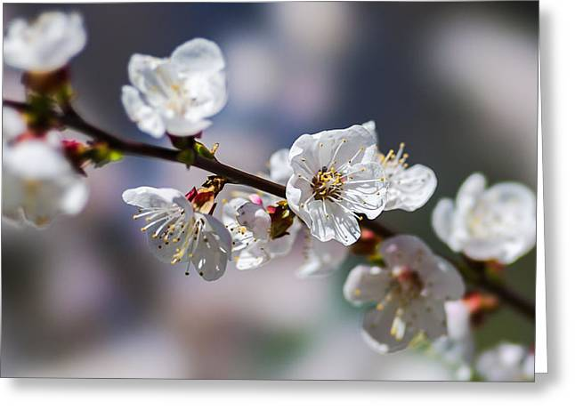 Photo Calendars Greeting Cards - Pink Mists Of Spring 2 Greeting Card by Alexander Senin