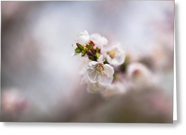 Photo Calendars Greeting Cards - Pink Mists Of Spring 5 Greeting Card by Alexander Senin