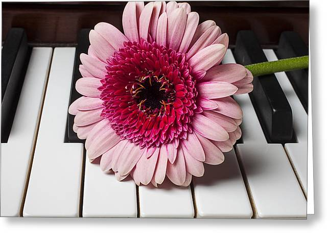 Pink Chrysanthemums Greeting Cards - Pink mum on piano keys Greeting Card by Garry Gay