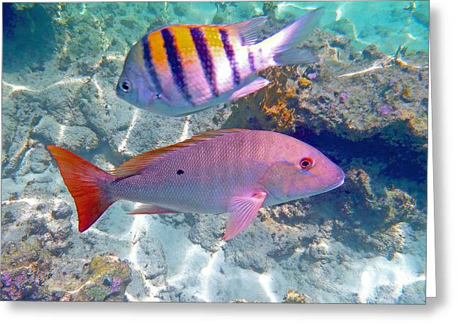 Scuba Diving Greeting Cards - Pink Mutton Greeting Card by Carey Chen