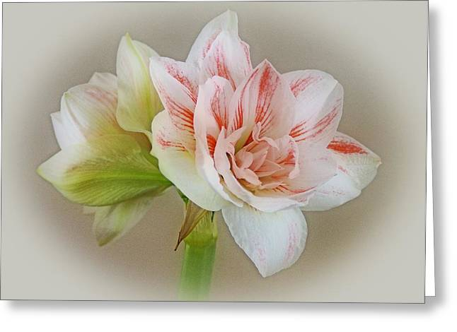 Indiana Flowers Greeting Cards - Pink Nymph Greeting Card by Sandy Keeton
