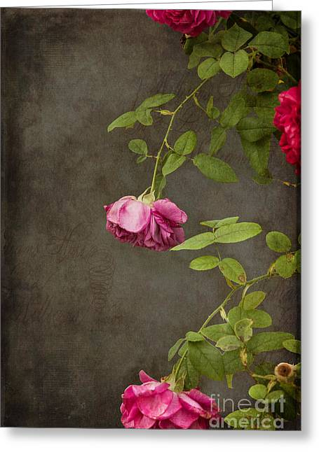 Floral Digital Art Greeting Cards - Pink On Gray Greeting Card by K Hines