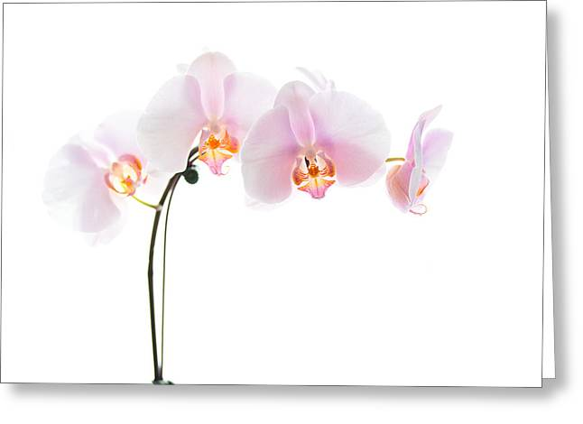 Phalaenopsis Orchid Greeting Cards - Pink Orchid Flowers Greeting Card by Stephanie McDowell
