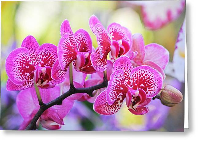 Fineartamerica Greeting Cards - Pink Orchid Group Greeting Card by Michael Saunders