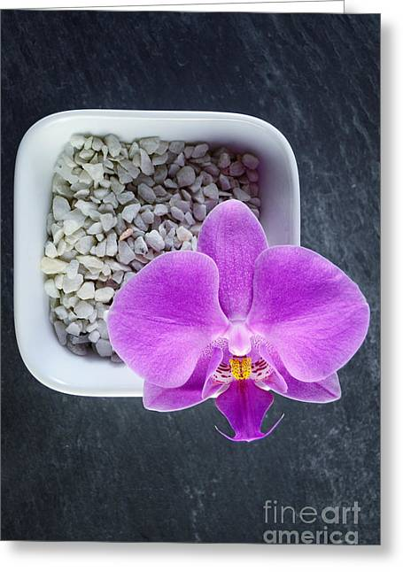Centerpiece Greeting Cards - Pink Orchid in White Bowl on Black Slate Greeting Card by Sabine Jacobs