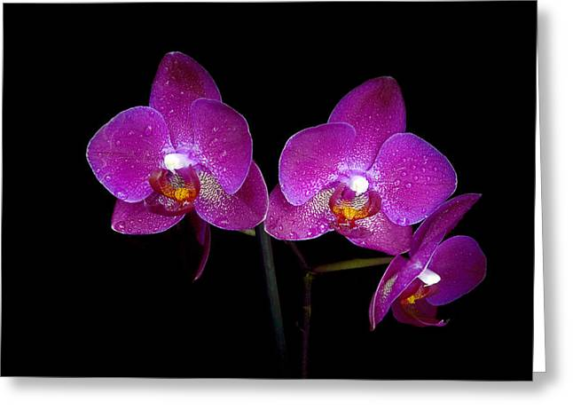 Pink Flower Branch Greeting Cards - Pink orchid  Greeting Card by Toppart Sweden