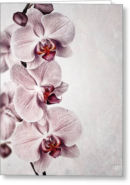 Vein Greeting Cards - Pink orchid vintage Greeting Card by Jane Rix