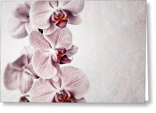 Pink orchid vintage Greeting Card by Jane Rix