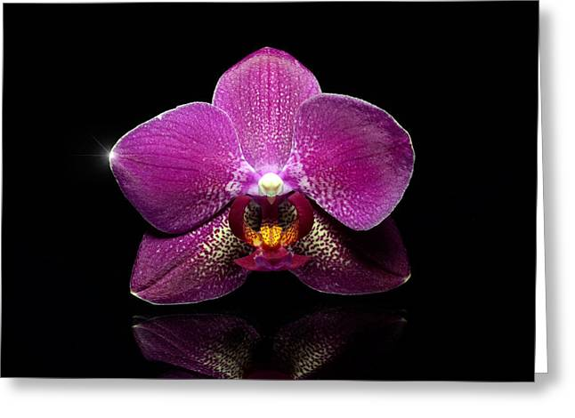 High Vulnerability Greeting Cards - Pink orchid with reflection Greeting Card by Toppart Sweden