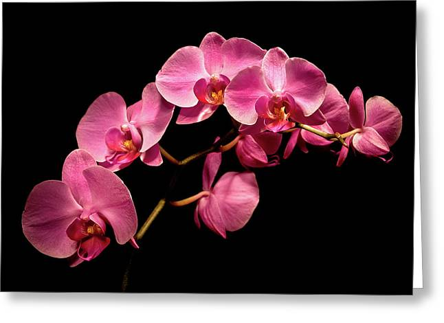 Phalaenopsis Orchid Greeting Cards - Pink Orchids 3 Greeting Card by  Onyonet  Photo Studios