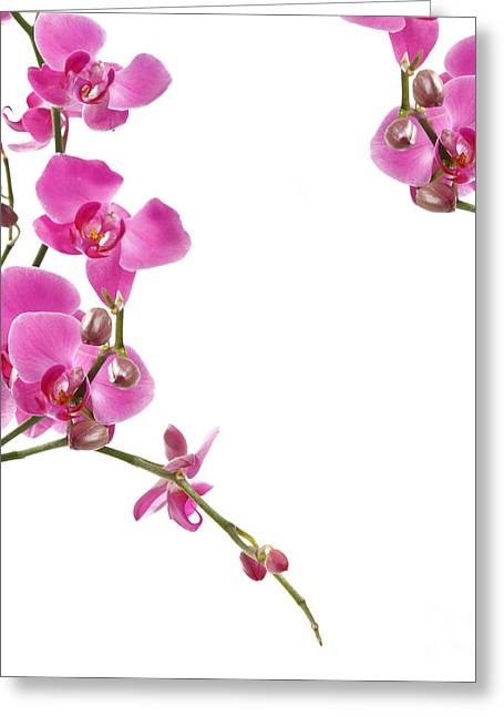 Abstract Nature Pyrography Greeting Cards - Pink Orchids Greeting Card by Boon Mee