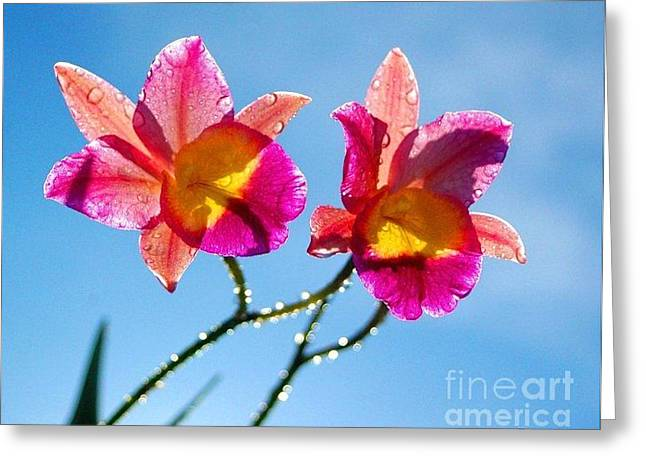 Flowers Against The Sky Greeting Cards - Pink Orchids Greeting Card by Puma Ghostwalker