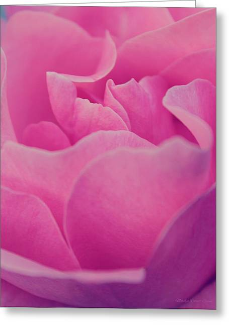 Amazing Greeting Cards - Pink Passion Greeting Card by  The Art Of Marilyn Ridoutt-Greene