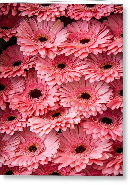 Square Format Greeting Cards - Pink Peach Gerbera 1. Amsterdam Flower Market Greeting Card by Jenny Rainbow