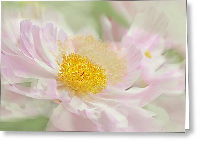 Green And Yellow Greeting Cards - Pink Peony Flower  Greeting Card by Jennie Marie Schell