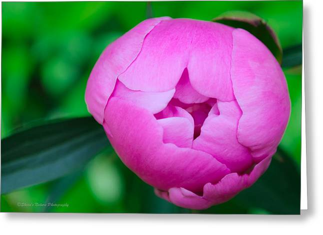 Sheen Greeting Cards - Pink Peony for the Cure Greeting Card by Sheen Watkins