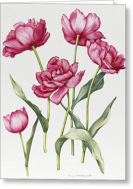 Pink Blossoms Greeting Cards - Pink Peony Tulips Greeting Card by Sally Crosthwaite