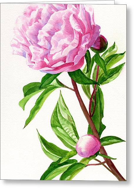 Peony Art Greeting Cards - Pink Peony with Leaves Greeting Card by Sharon Freeman