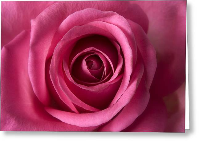 Pink Flower Prints Greeting Cards - Pink Perfection - Roses Flowers Macro Fine Art Photography Greeting Card by Artecco Fine Art Photography