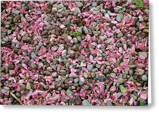 Leaves Greeting Cards - Pink Petals on Stones  Greeting Card by Aimee L Maher Photography and Art