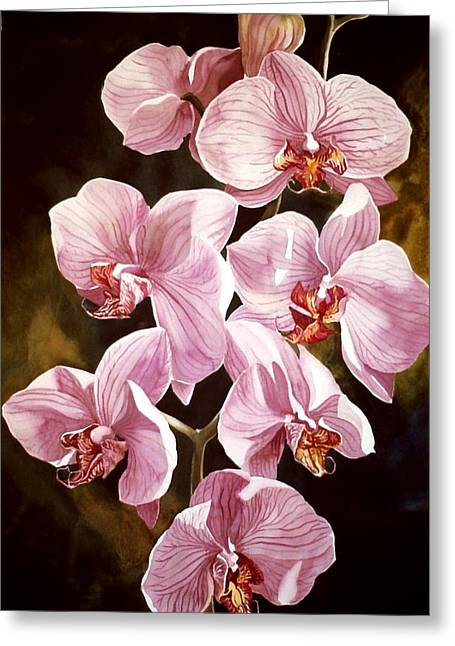 Alfred Ng Art Greeting Cards - Pink Phalaenopis Orchids Greeting Card by Alfred Ng