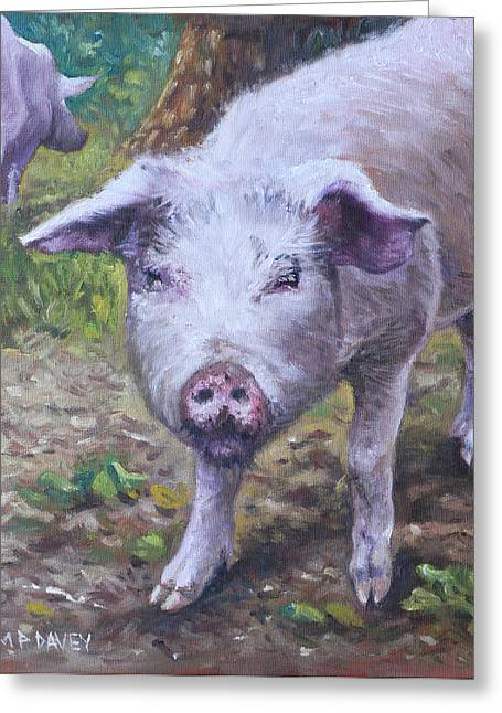 Piglets Greeting Cards - Pink Pig Portrait Greeting Card by Martin Davey