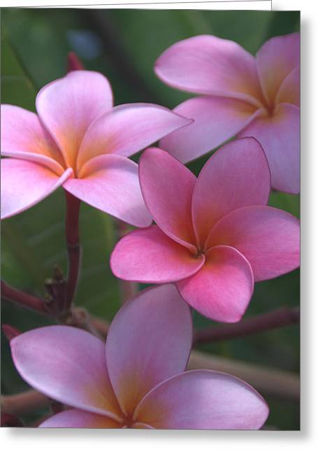 Flower Picture Greeting Cards - Pink Plumeria Greeting Card by Brian Harig