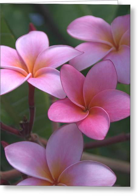 Vertical Greeting Cards - Pink Plumeria Greeting Card by Brian Harig