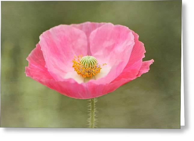 Poppy Decorations Greeting Cards - Pink Poppy Flower Greeting Card by Kim Hojnacki