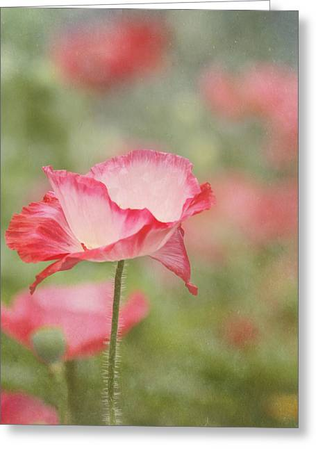 Poppy Decorations Greeting Cards - Pink Poppy Greeting Card by Kim Hojnacki