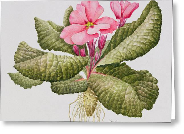 Green Leafs Greeting Cards - Pink primrose Greeting Card by Sally Crosthwaite