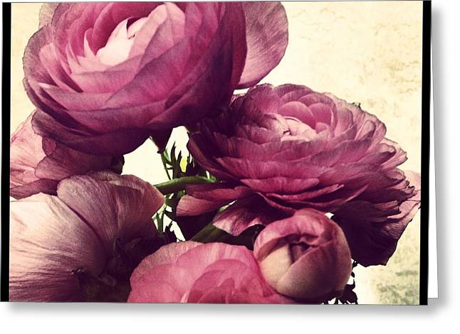 Spring Bulbs Mixed Media Greeting Cards - Pink  Ranunculus Greeting Card by Heather L Giltner