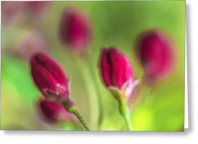 Arkady Kunysz Greeting Cards - Pink red buds Greeting Card by Arkady Kunysz