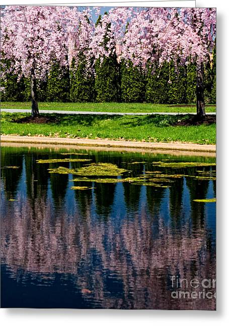 Pa Greeting Cards - Pink Reflection Greeting Card by Paul W Faust -  Impressions of Light