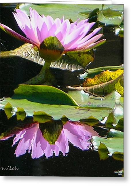 Water Garden Pyrography Greeting Cards - Pink Reflections Greeting Card by John Lautermilch