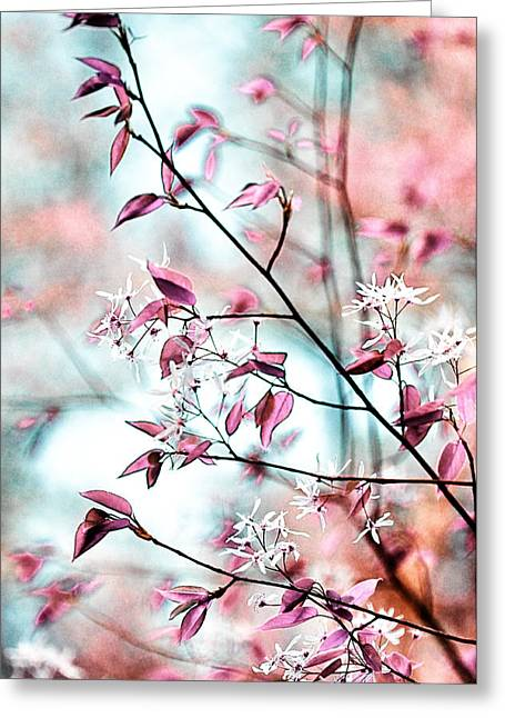 Daydream Greeting Cards - Pink Reverie Greeting Card by Heather Bridenstine