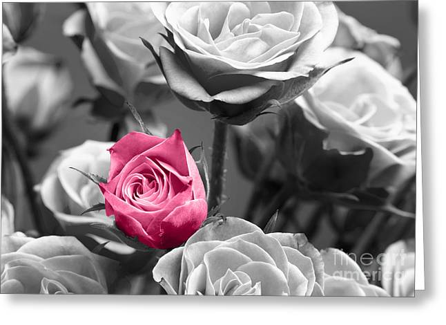 Passion Greeting Cards - Pink Rose Greeting Card by Blink Images