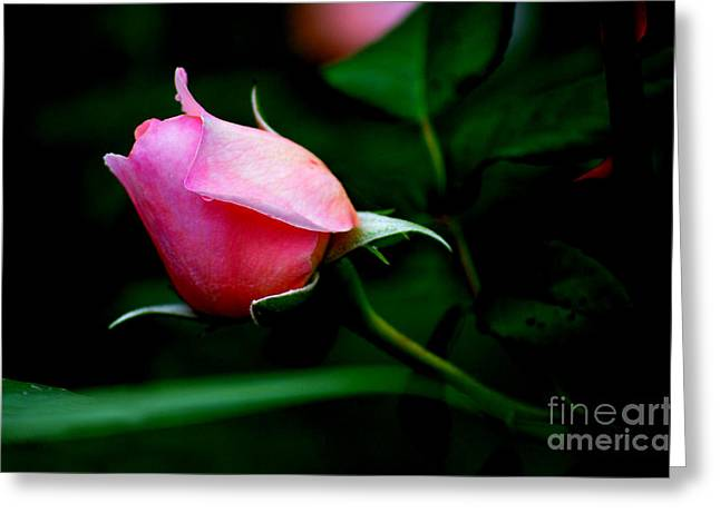 Ru Greeting Cards - Pink Rose Bud Greeting Card by Lj Lambert
