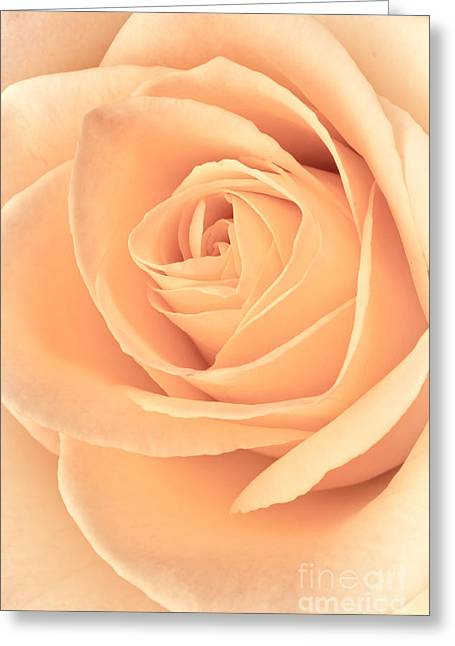 Vector Image Photographs Greeting Cards - Pink Rose Greeting Card by Edward Fielding