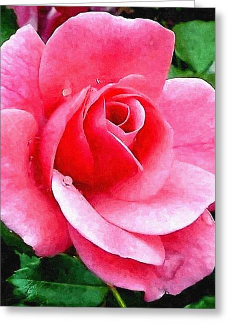 Commercial Photography Pastels Greeting Cards - Pink Rose For Anne H b Greeting Card by Gert J Rheeders