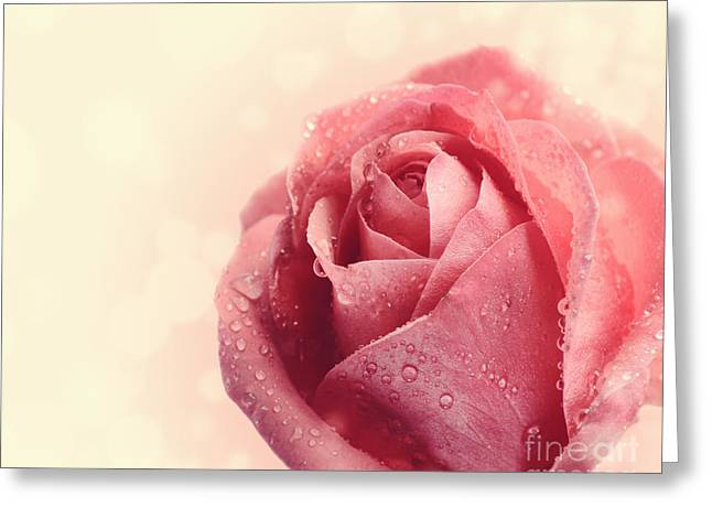 Water Garden Pyrography Greeting Cards - Pink Rose Greeting Card by Jelena Jovanovic