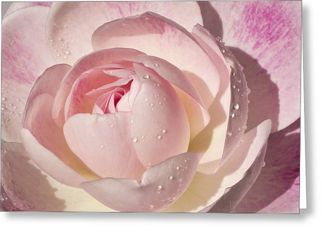 The Nature Center Greeting Cards - Pink Rose Greeting Card by Mariola Szeliga